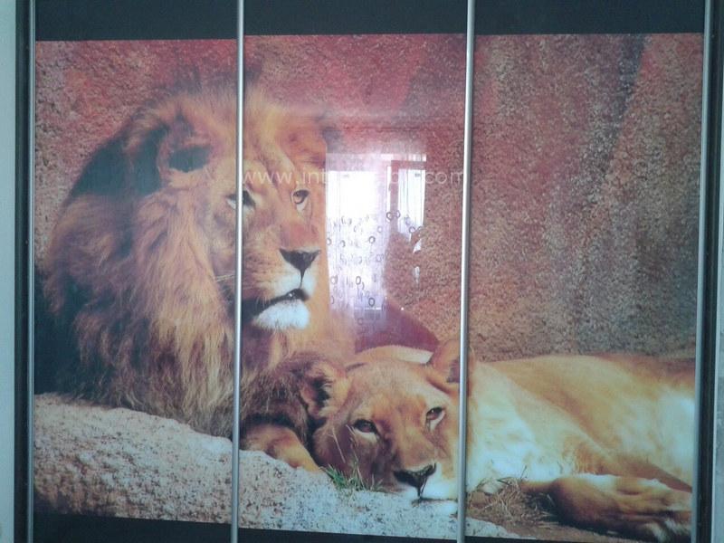 Шкаф купе фотопечать со львом